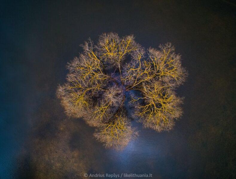 Floating Nest / Plaukiantis lizdas
